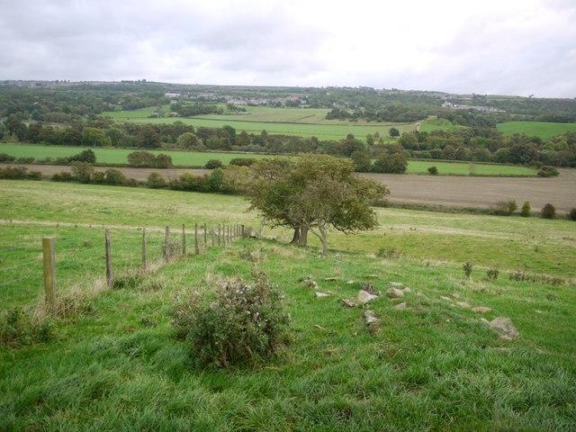 Old boundary south of Ovington