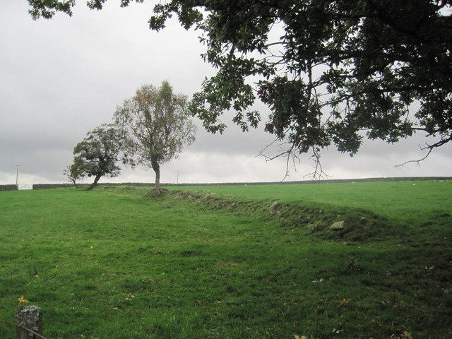 Old Field Boundary near Greenhaugh