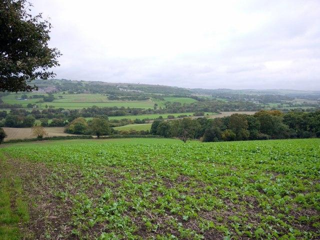 Arable field south of Ovington