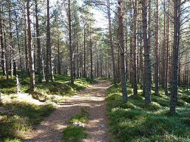 Forest track north of Balnagower Cottage