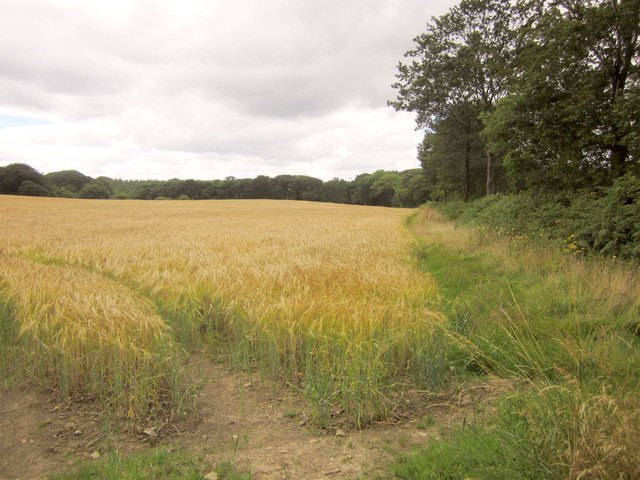 Barley near Sedgewell Cross