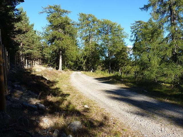 Forest track between Inverchandlick and Balnagower cottages