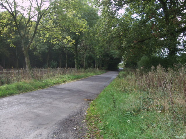 Lane to Flaxlands, and Morris's Copse, near Hook
