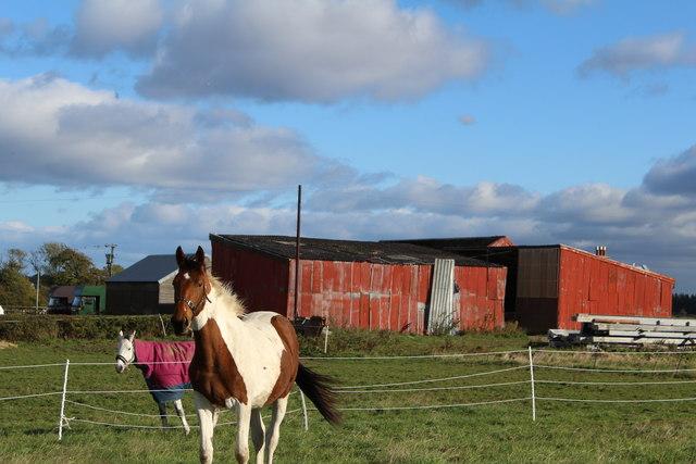 Horses & Sheds at Blairs