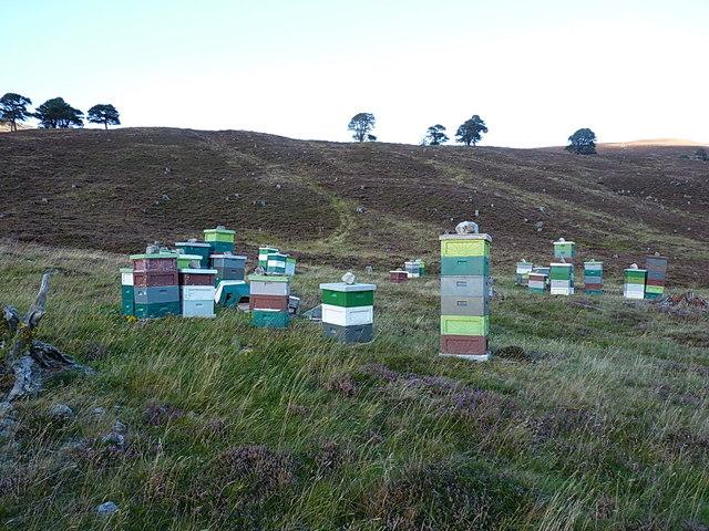 Dee-side heather honey under construction