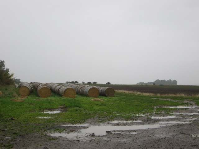 A wet, messy place to store the hay bales