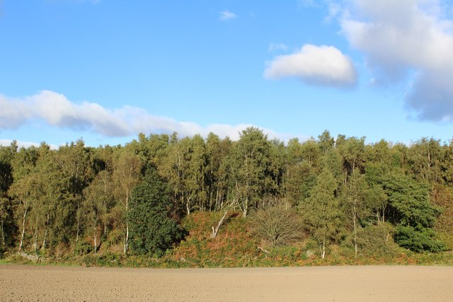 Ploughed Field & Woodland east of Muirmailing