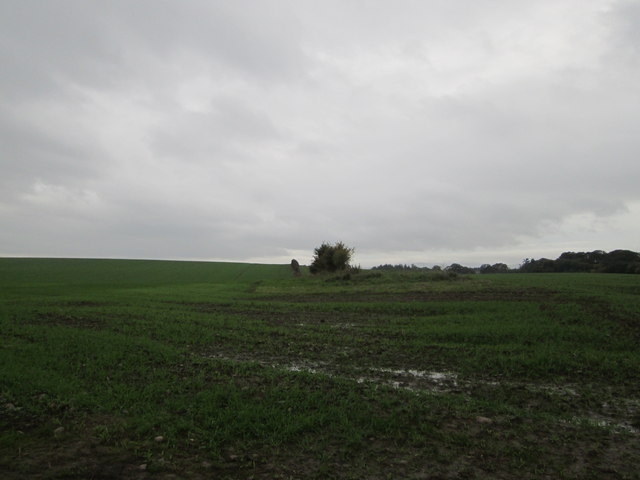 A wet crop at Shellacres