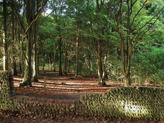 Friston Forest (Side Hill Field)