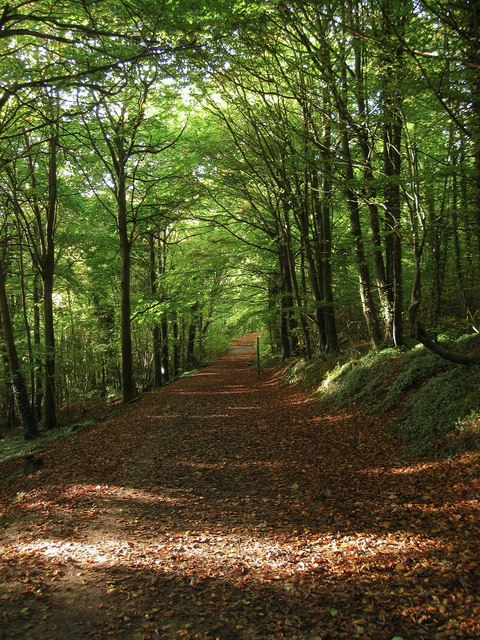 South Downs Way, Friston Forest