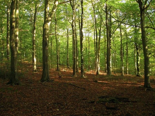 Friston Forest (Stone Croft Laine)