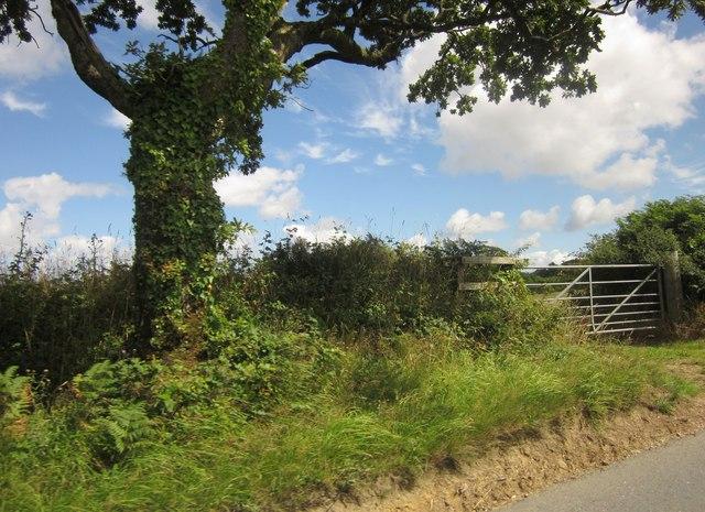 Oak tree and gate near Paddon
