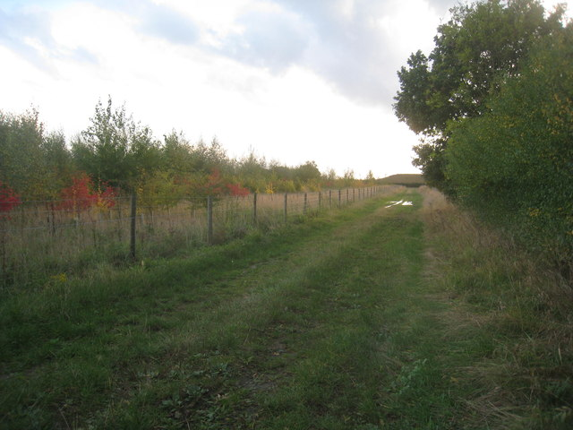 Track alongside a new plantation