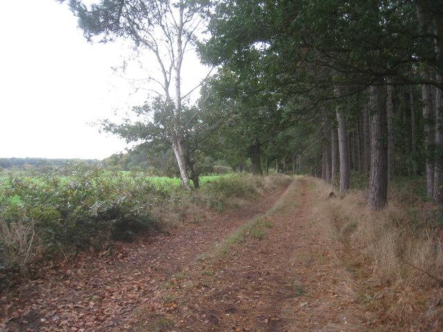 Path along the fringe of Tunman Wood