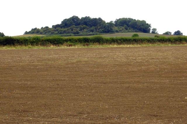 Looking across farmland to Harrowdown Hill