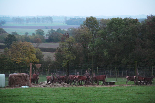 Red deer by the A18