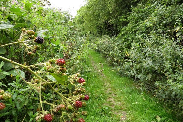 Footpath past the brambles