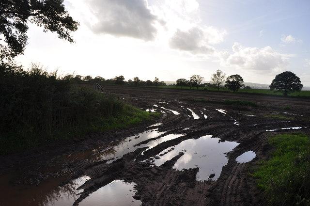 Mid Devon : Muddy Field