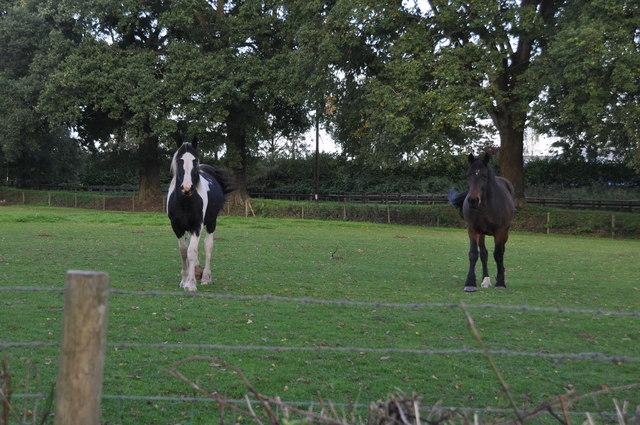 Mid Devon : Horses Grazing
