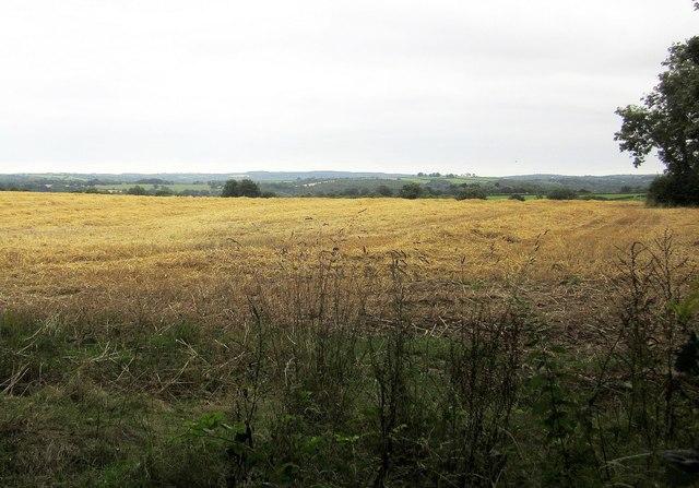 Field by Upcott Wood
