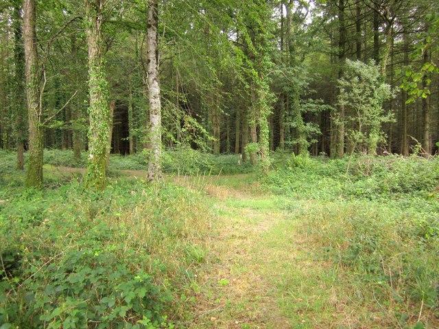 Upcott Wood