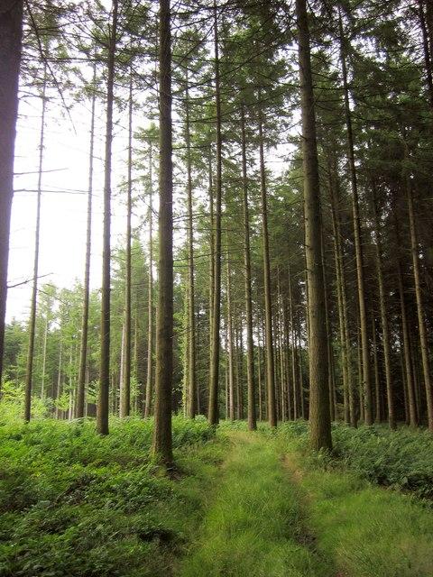 Path, Upcott Wood