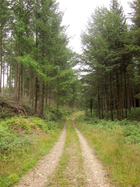 Track, Upcott Wood