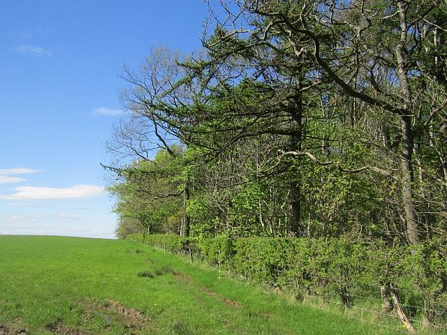Woodland, Caprington