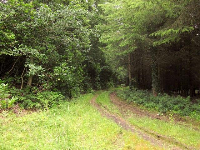 Track, Buckland Wood