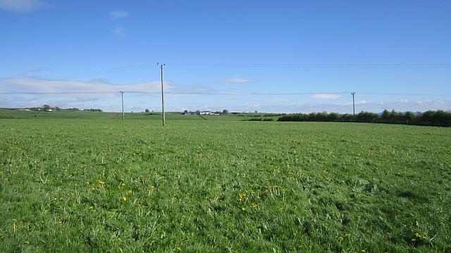Grassland, Stafflar