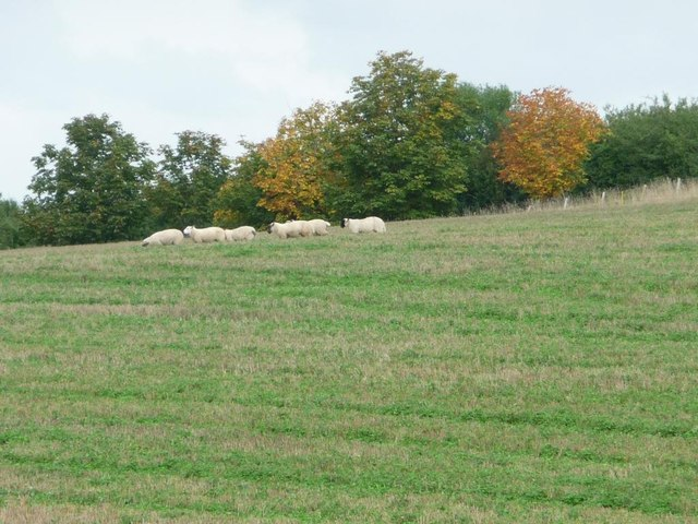 Autumn colours alongside the sheep pasture