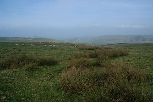 Rough grazing above Turnshawflat
