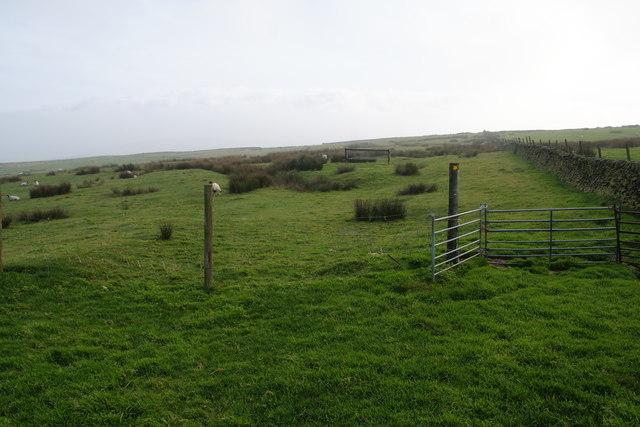 Footpath across moorland grazing