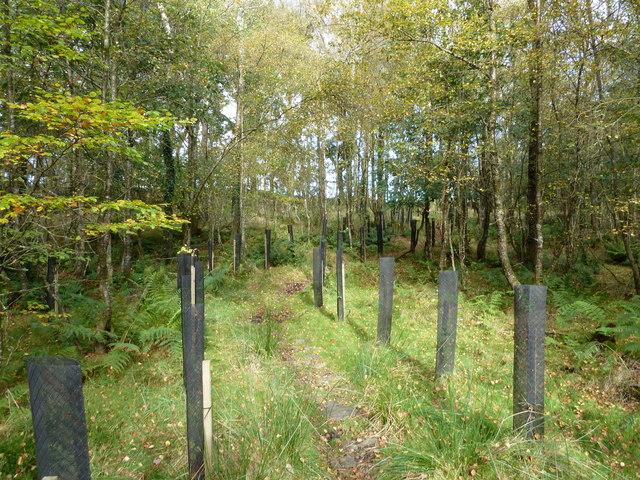 New saplings along the path
