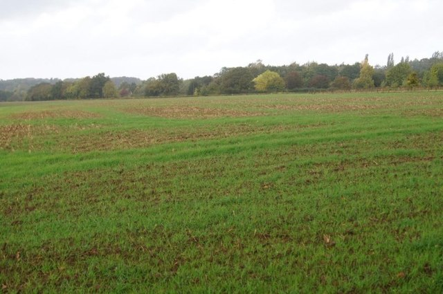 Fields south of Plastow Green