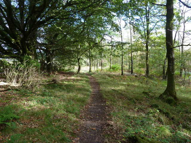 Spacious, deciduous woodland in Balloch Wood
