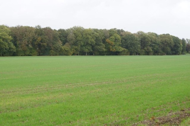 Fields by Well Close Copse