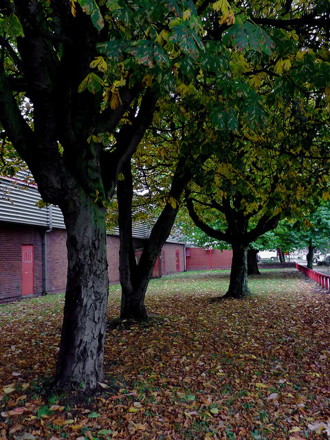 Underneath the maple trees in Willenhall, Walsall