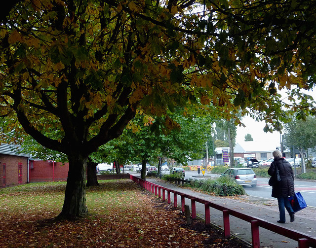 Maple trees by Owen Road in Willenhall, Walsall
