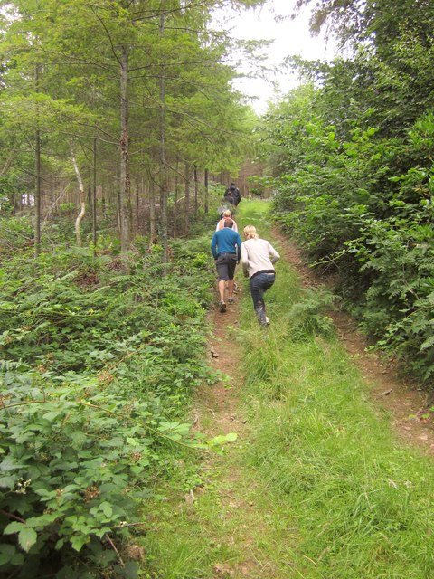 Path, Buckland Wood