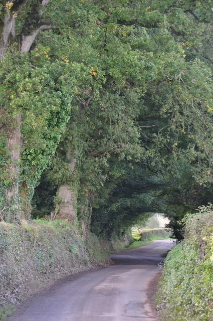 Mid Devon : Country Road