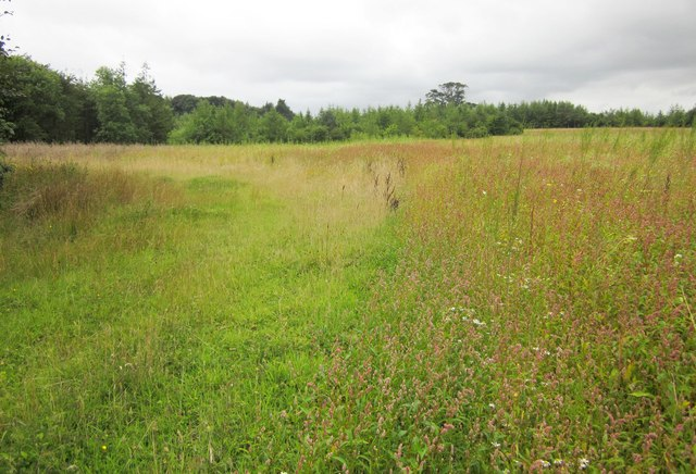 Grassland near Buckland House