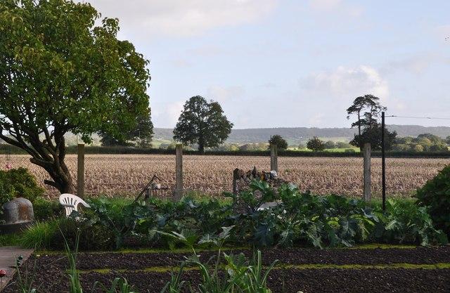 Mid Devon : Garden & Field