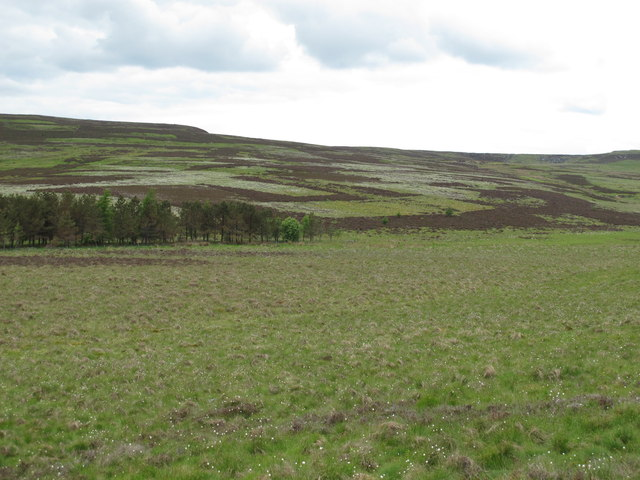 The valley of Bellshiel Burn south of Green Sike