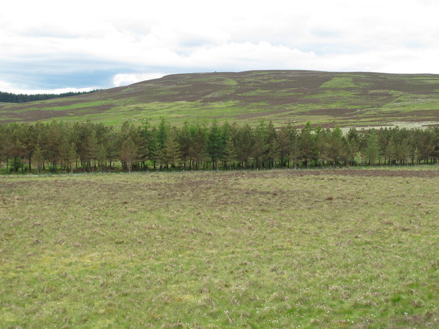 Trees marking the course of Bellshiel Burn below Dour Hill