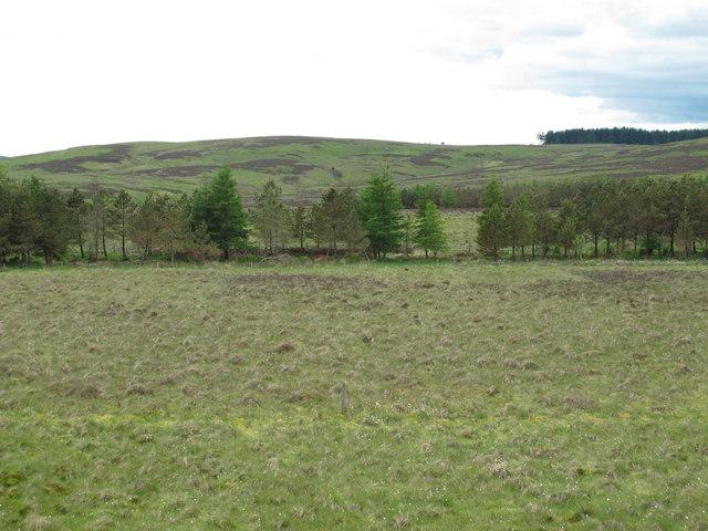 Trees marking the course of Bellshiel Burn below Dour Hill (2)
