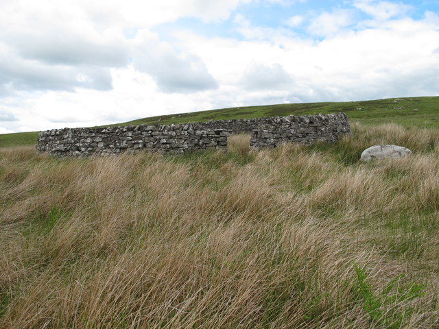 Sheepfold in the valley of Bellshiel Burn east of Dour Hill (2)