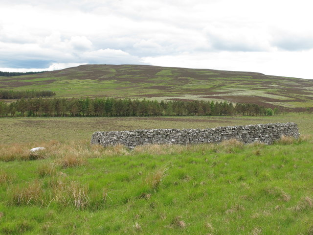 Sheepfold in the valley of Bellshiel Burn east of Dour Hill (3)