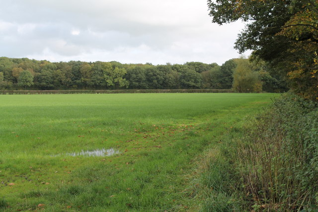 Wet Grass Field off Hay Lane