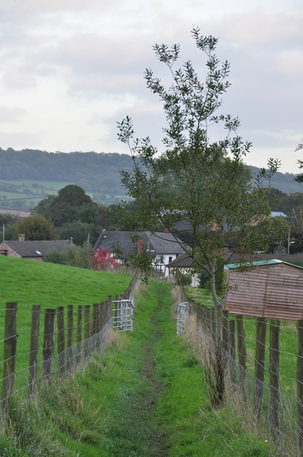 Mid Devon : Grassy Footpath